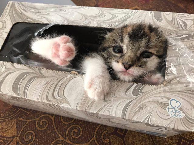 Кошечка в коробке