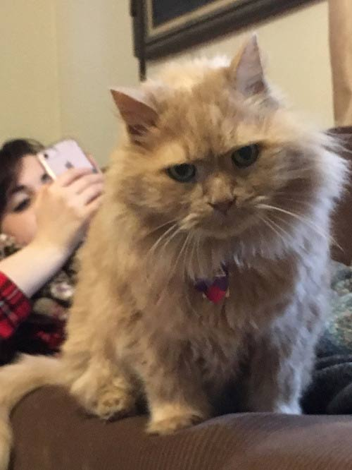 Котик дома