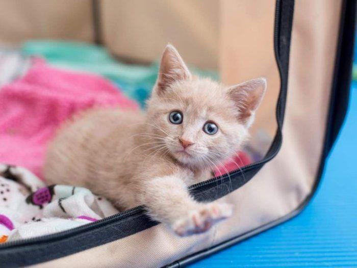 Любопытная котя