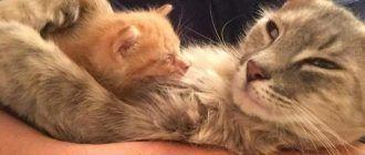 Два котика обнимаются