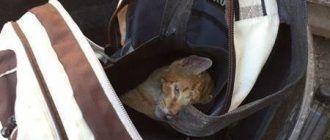 Котик в рюкзаке