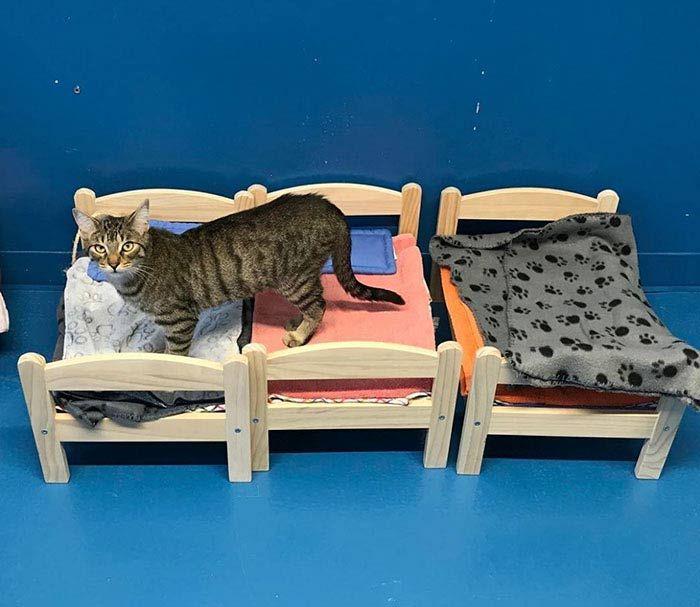 Кошечка на кроватках