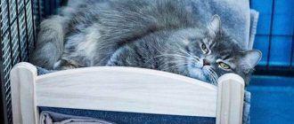Пушистый котик на кровати