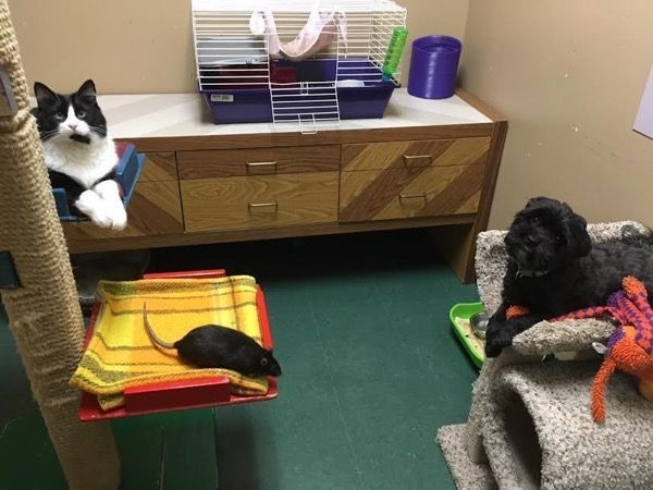 Котик, крыса и собака