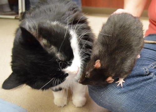 Джек и Твикс целуются