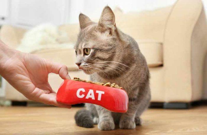 Кот воротит нос