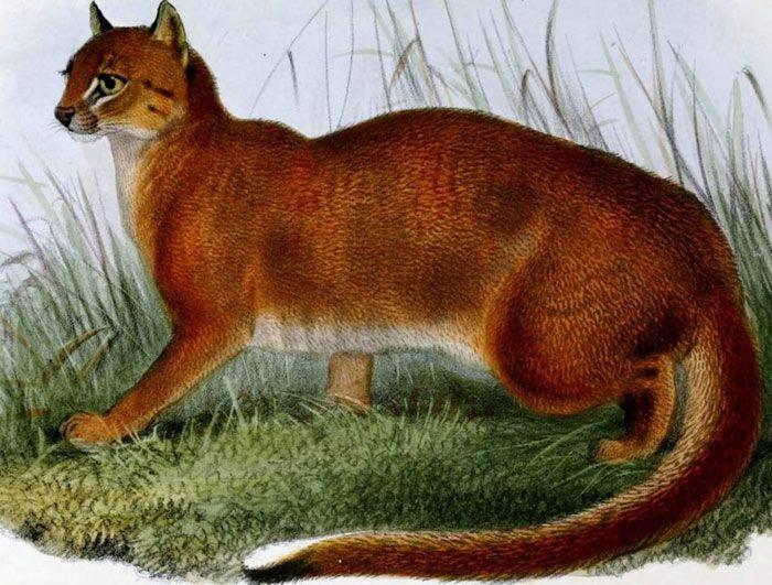 Кошка на рисунке