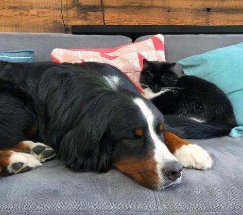 Спят вместе