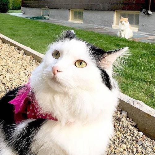 Котик подглядывает за кошечкой