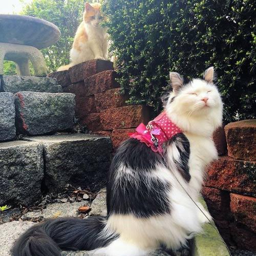 Котик подсматривает