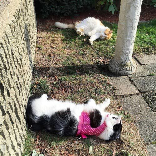 Котики шалят