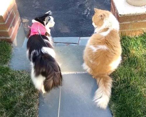 Кошечка и котик вместе