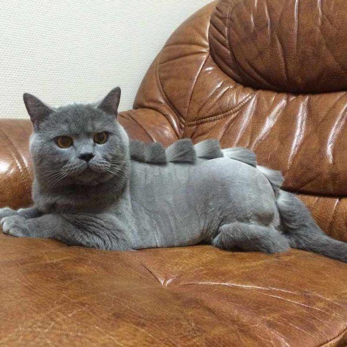 Кошка в кресле