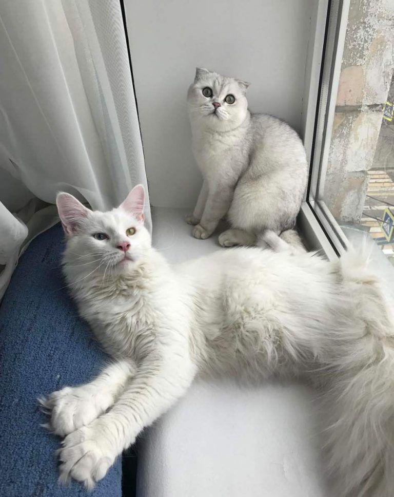 Тихон и его подруга