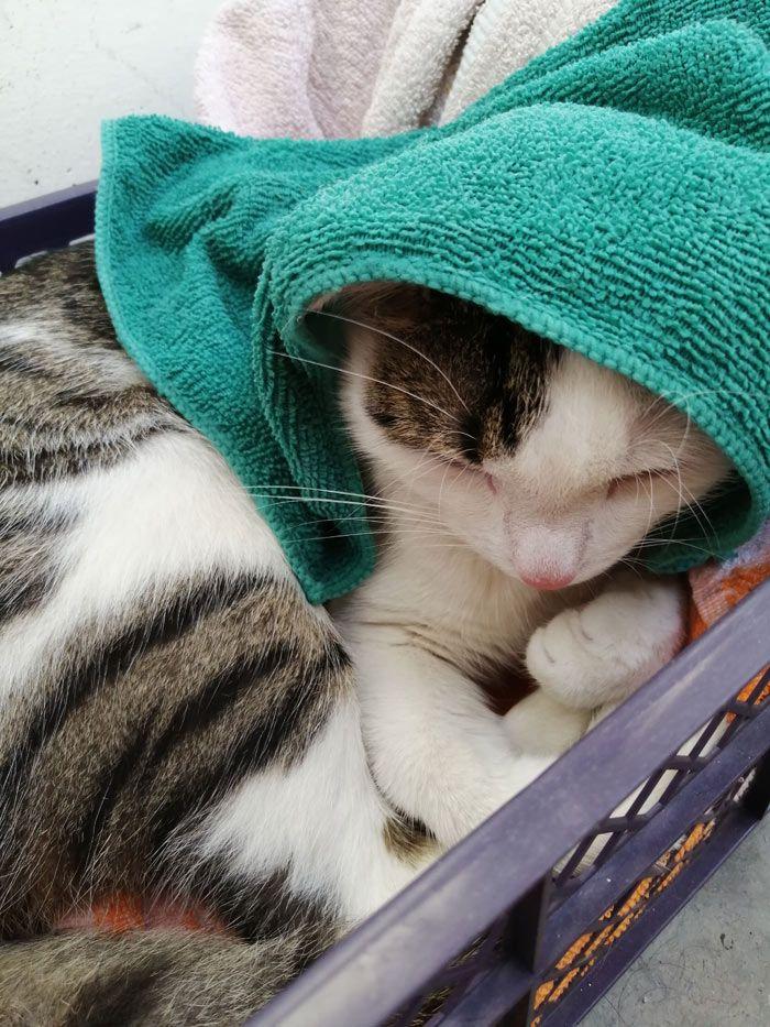 Вася в полотенце