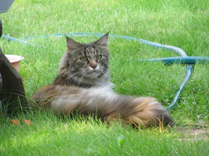 Дилайт на траве