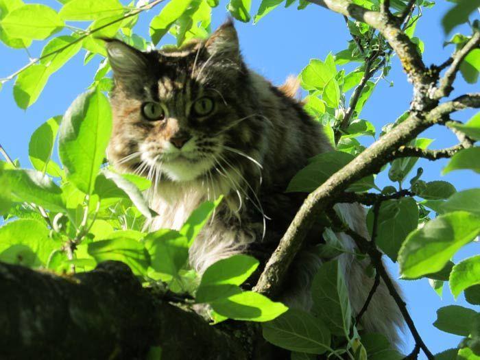 Дилайт на дереве