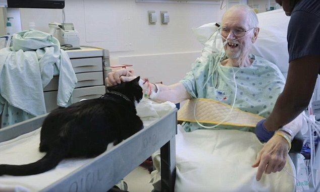 Кот с пациентом