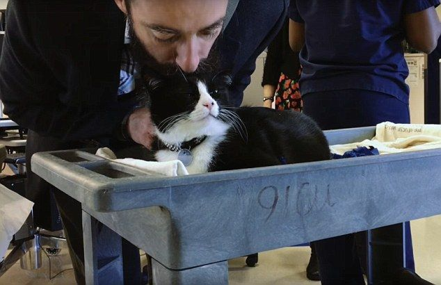 Котик с сотрудником