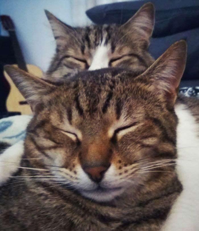 Сонные котики