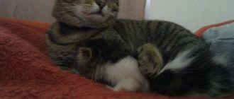 Фред и Карл обнимаются
