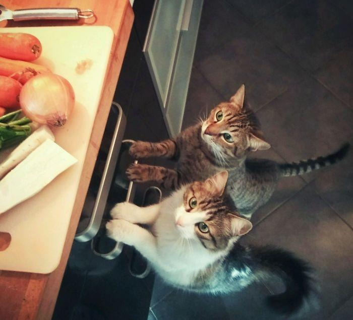 Котики вместе