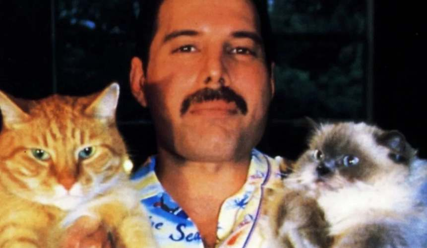 Фредди и кошки