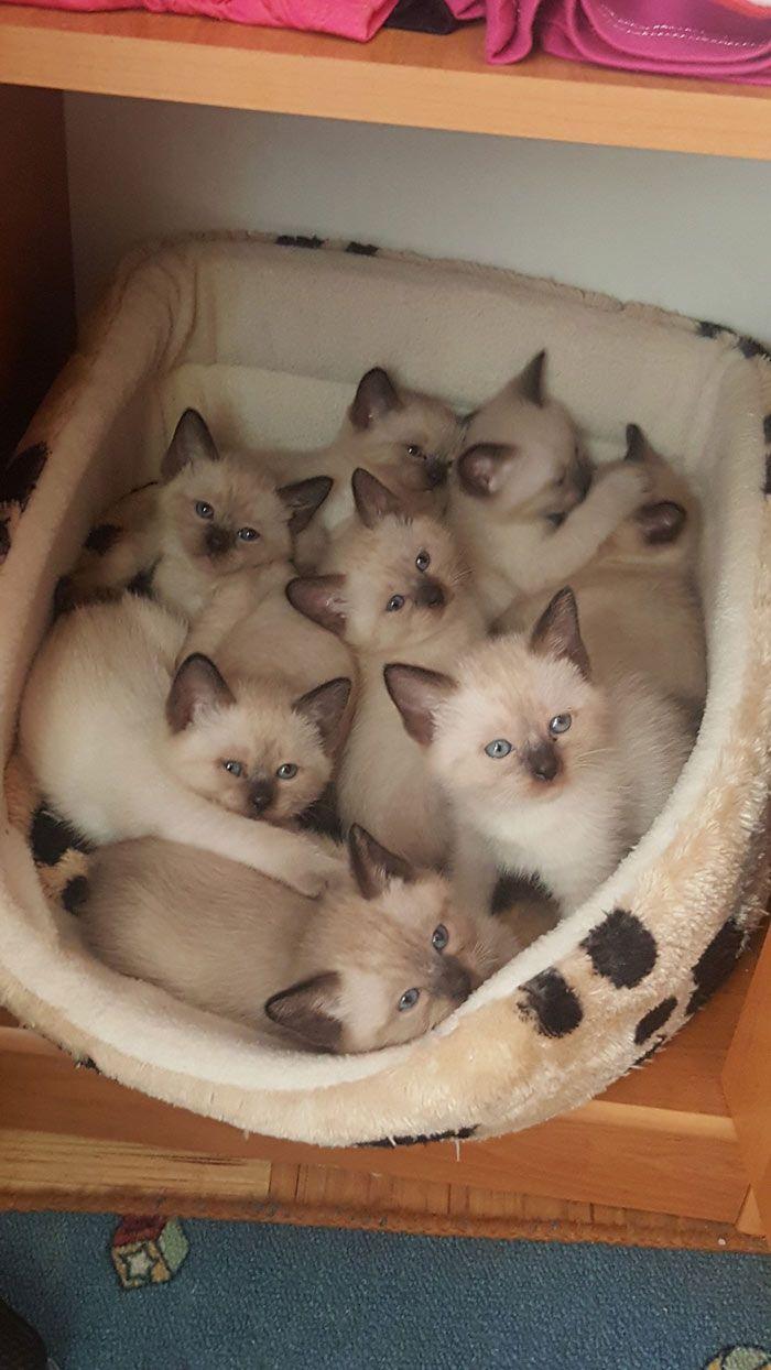 Много котяток