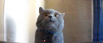 Камера на кошке