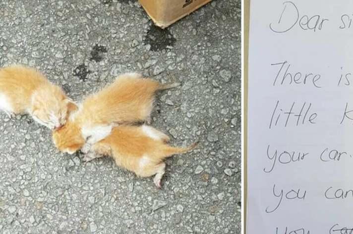 Котики и записка