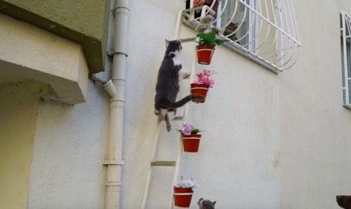 Котик на лестнице