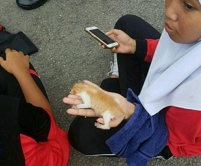 Один из котят