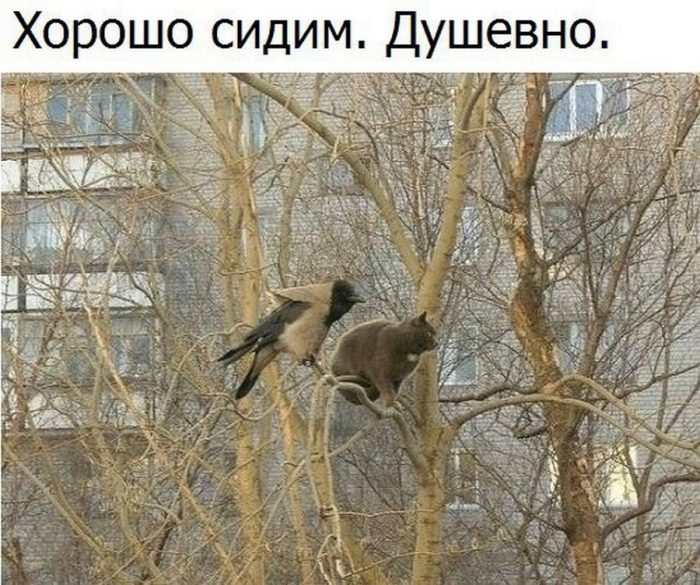 Кот и ворона на дереве