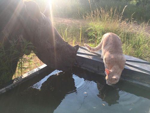 Котик и носорог пьют