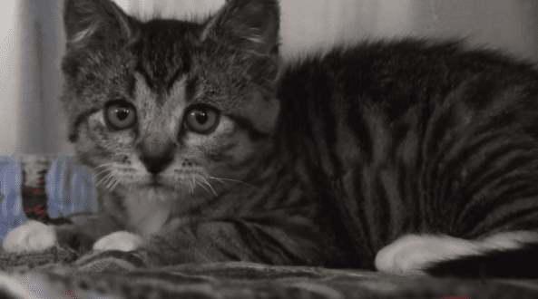 Спасенный котнеок