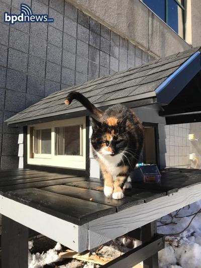 Кошечка у дома