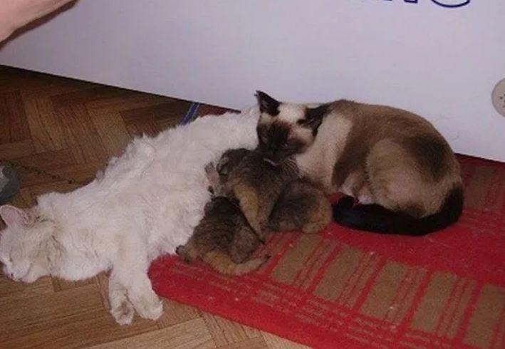 Котята уже в доме