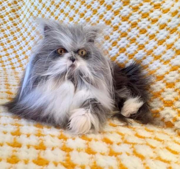 Котик Атчум