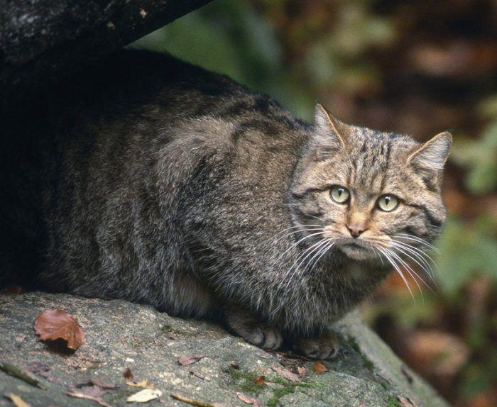 Котик на камне