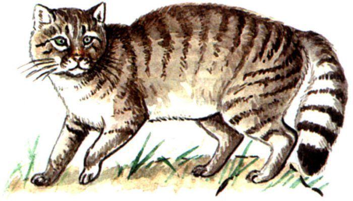 Как изображают лесного кота