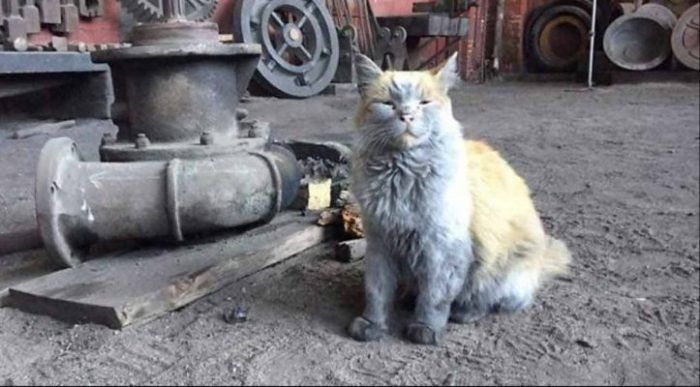 Грязный котик у поезда