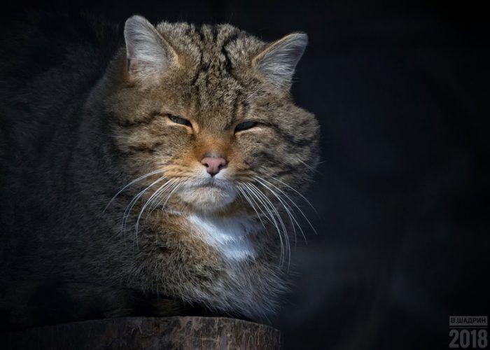 Лесной котик на солнышке