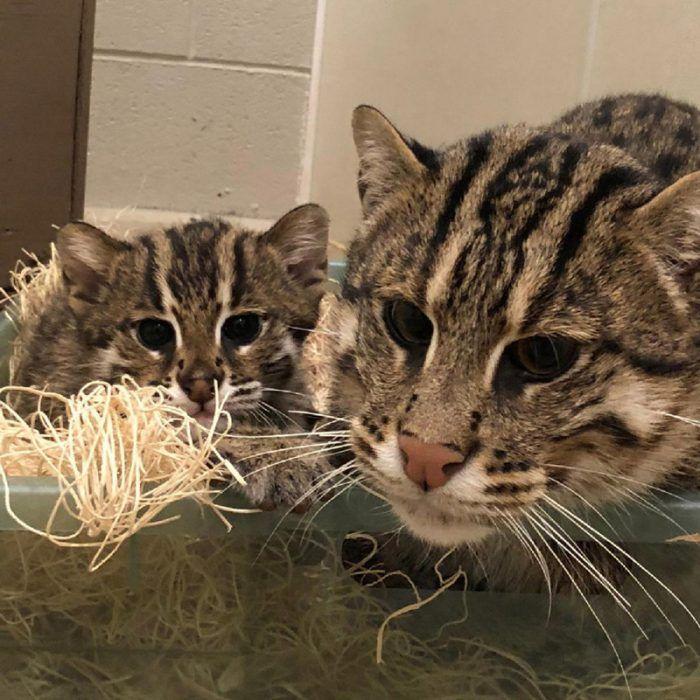 Кошка с котенком в клетке