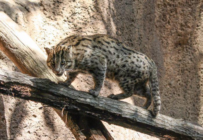 Кот на бревнышке