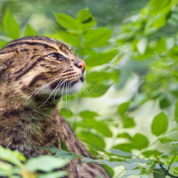 Котик прячется в листве