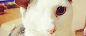 Котик без глаза