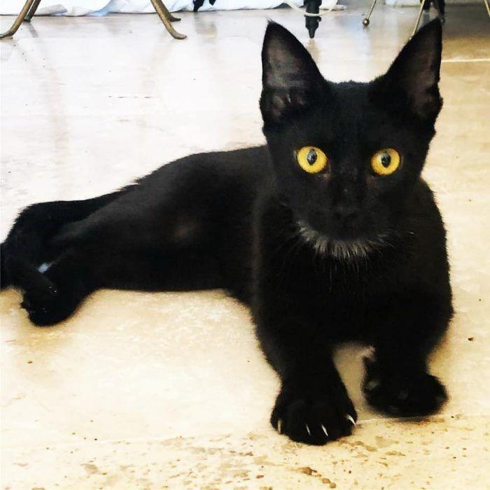 Черненькая Джанго