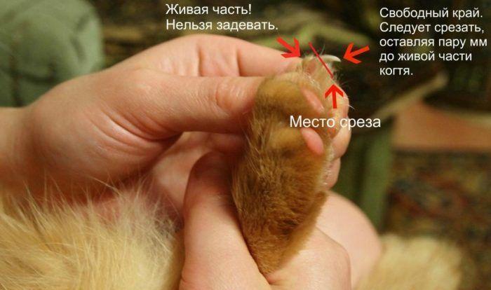 Как подстригать когти