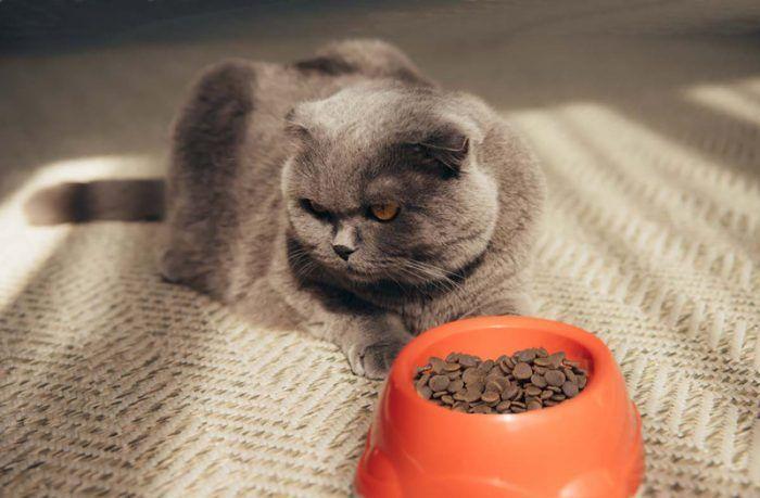 Кошка против сухого корма