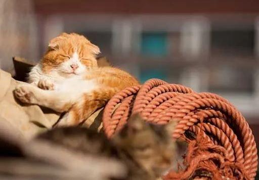 Спит на лодке